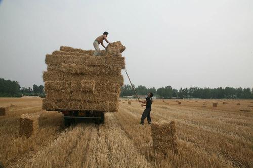 利用小麦秸秆创富都有哪些方法?